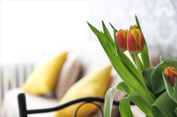 管理の手間いらず!部屋に花とかグリーンとか飾りたい方に!