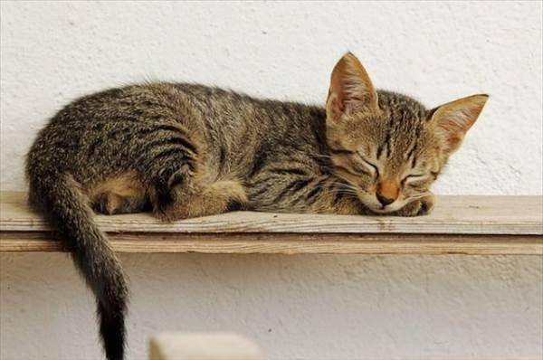 【めぐりズム】は目の疲れをゆったり癒してぐっすり眠るためのアイテム